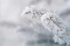 Jodła zakrywająca z hoar zbliżenia mrozową fotografią Obraz Royalty Free