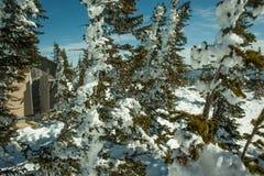 jodła zakrywający śnieg Obraz Royalty Free