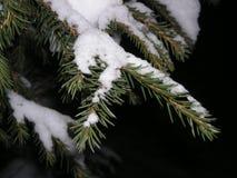 Jodły gałąź w śniegu zdjęcie royalty free