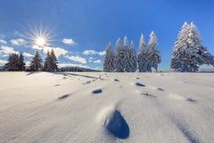 Jodły w zimie fotografia royalty free