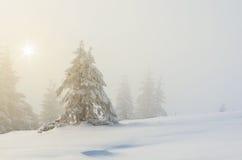 jodły krajobrazowa drzew zima Zdjęcie Royalty Free