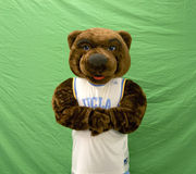 Joe Bruin. UCLA Day, Westwood, CA May 17th, 2008:  The UCLA Bruin at the first annual UCLA Day Stock Photo
