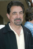 Joe Mantegna Lizenzfreies Stockbild