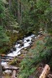 Joffre Creek conecta en cascada abajo el barranco Imagen de archivo libre de regalías