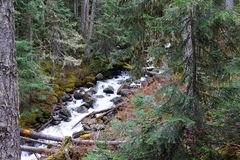 Joffre Creek conecta en cascada abajo el barranco Imagenes de archivo