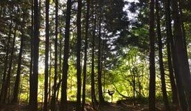 Joga drzewa Zdjęcia Royalty Free
