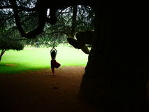 Joga drzewna poza Obraz Stock
