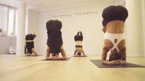 Joga klasa Ludzie robi joga ćwiczeniom zbiory wideo