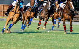 Jogador dos cavalos e do polo Imagens de Stock Royalty Free