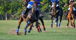 Jogador e cavalo do polo durante as raças imagens de stock