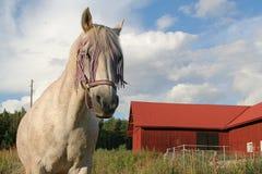 Jogador o cavalo Fotografia de Stock Royalty Free