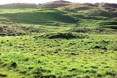 Jogadores de golfe que playering no campo de golfe das ligações Fotografia de Stock Royalty Free