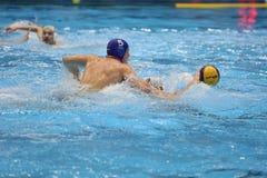 Jogadores do polo aquático que lutam pela bola Fotografia de Stock