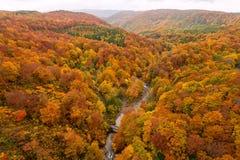 Jogakuravallei in mooi de herfstseizoen Stock Afbeelding