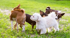 Jogando cães foto de stock