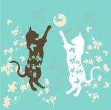 Jogando gatos Fotografia de Stock
