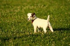 Jogando o animal de estimação 2 Fotos de Stock Royalty Free