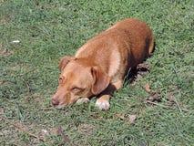 Jogando o cão Foto de Stock Royalty Free