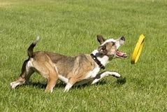 Jogando o cão imagem de stock royalty free