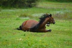 Jogando o cavalo Foto de Stock Royalty Free