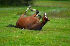 Jogando o cavalo foto de stock