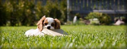Jogando o filhote de cachorro Fotos de Stock