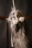 Jogando o gato imagem de stock