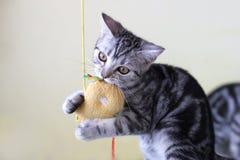Jogando o gato Foto de Stock Royalty Free