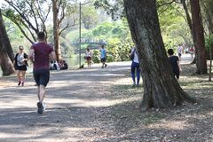 Jogga Ibirapuera parkera Sao Paulo Brazil Fotografering för Bildbyråer
