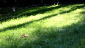Jogga till och med högväxt gräs 2 stock video