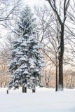 Jogger зимы Стоковые Изображения