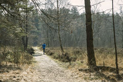 Jogger in a Forest royalty free stock image