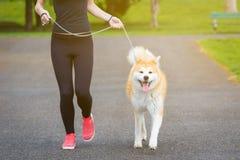 Jogger i Akita pies biega outdoors obraz stock