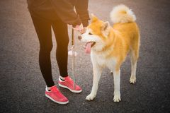 Jogger i Akita pies outdoors obrazy royalty free