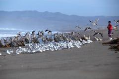 Jogger na plaży z seabirds Fotografia Royalty Free