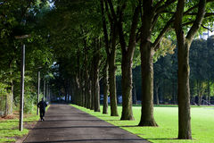 Jogger in a park Stock Images