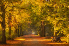 Jogger in the Park. Martijnvandernat.nl Stock Images