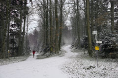 Jogger in wintry forest Royalty Free Stock Images