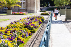 Jogger beside yellow and lavender garden in Jardin de Luxembourg, Paris. Jogger runs by garden bordering Senate building (Palais de Luxembourg) in the stock photos