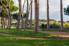 joggers Royaltyfri Fotografi