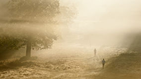 Joggers on a crisp foggy Autumn morning Royalty Free Stock Images