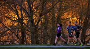 3 joggers in the sunset Royalty Free Stock Photography