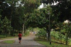 Joggers w Bishan Ang Mo Kio parku w Singapur Obrazy Royalty Free