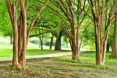 jogging δέντρα μονοπατιών Στοκ φωτογραφία με δικαίωμα ελεύθερης χρήσης