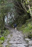 jogging природа человека Стоковое фото RF