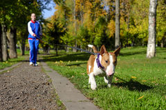Jogging with dog royalty free stock image