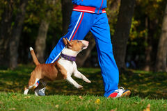 Jogging with dog Royalty Free Stock Photography