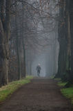 Jogging in the foggy park. Stock Photos