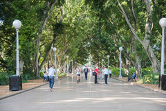 Jogging Hyde Park. SYDNEY,NSW,AUSTRALIA-NOVEMBER 18,2016: Tourists jogging, walking and resting at Hyde Park with fig tree lined pedestrian sidewalk in Sydney Stock Photos