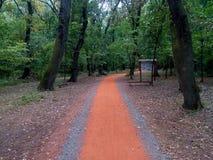 Jogging ślad w lesie Zdjęcia Stock